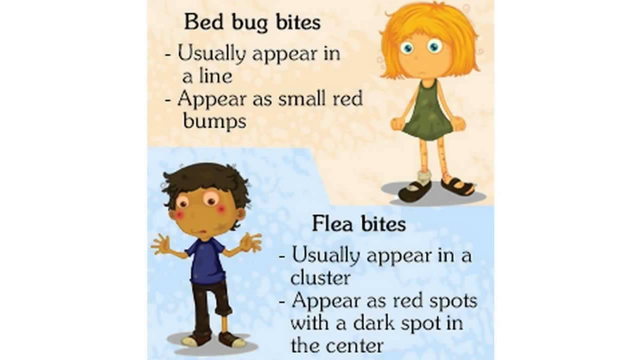 Are Bed Bugs And Fleas The Same How To Treat Dogs With Flea